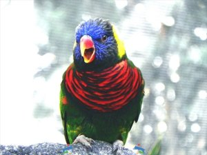 bird-photographer-austin-tx