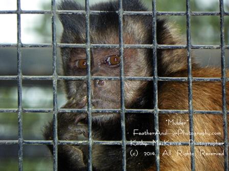 monkey-kathy mackenzie-photographer